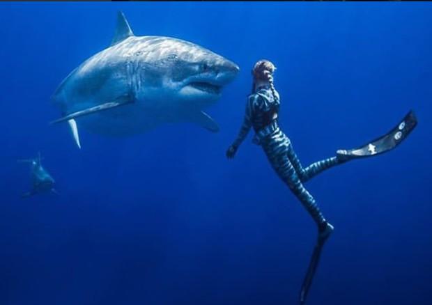 Nuotata e selfie con un enorme squalo bianco