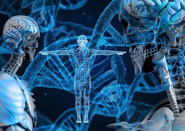 La prima mappa in HD del Dna ha individuato i punti in cui le mutazioni avvengono più frequentemente (fonte: PIxabay) © Ansa