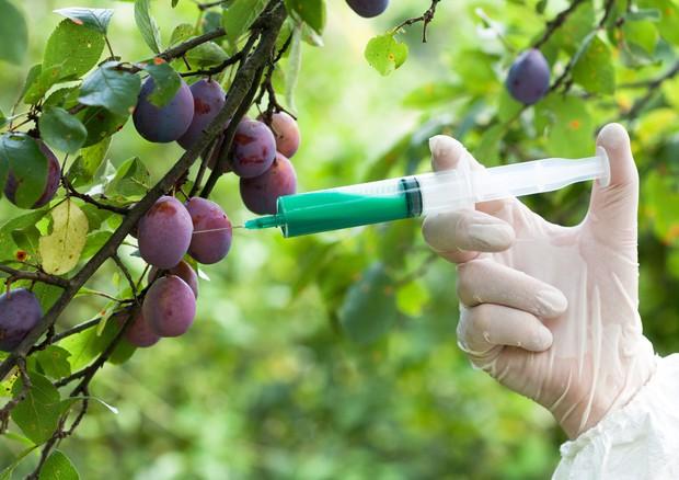 I fosfati potenzialmente pericolosi per l'organismo sono quelli aggiunti ai cibi come conservante © Ansa