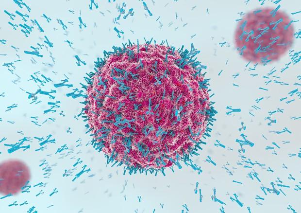 L'attacco del sistema immunitario © Ansa