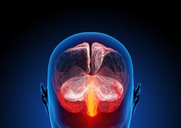 Nell'attività cerebrale il segreto della coscienza (fonte: ra2 studio – Fotolia.com, Flickr) © Ansa