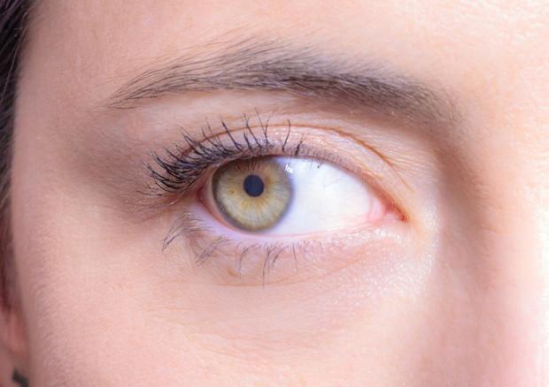 I micromovimenti degli occhi svolgono un ruolo cruciale nella visione (fonte: D.Farina, © 2018 IIT ID: 13571) © Ansa