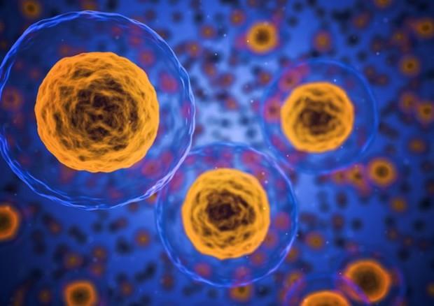Le cellule conservano nel loro Dna il ricordo della vita embrionale (fonte: Pixabay) © Ansa