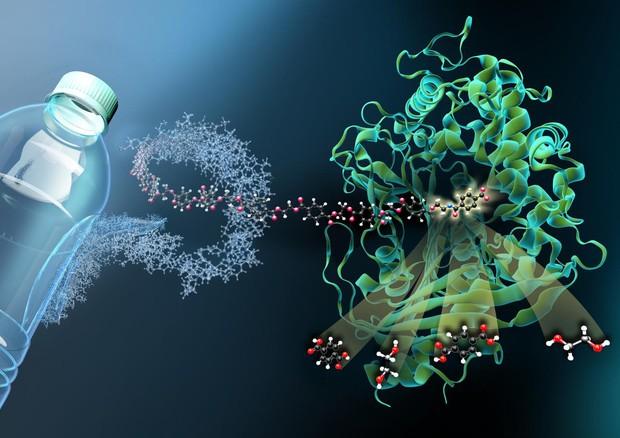 Risultati immagini per Trovate le forbici molecolari' per distruggere la plastica