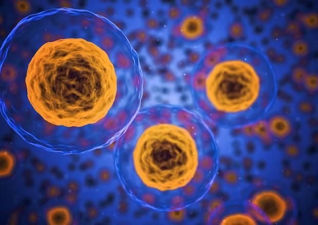 Ottenuta la prima cellula artificiale che produce l'energia che le serve grazie alla fotosintesi (fonte: Pixabay) © Ansa