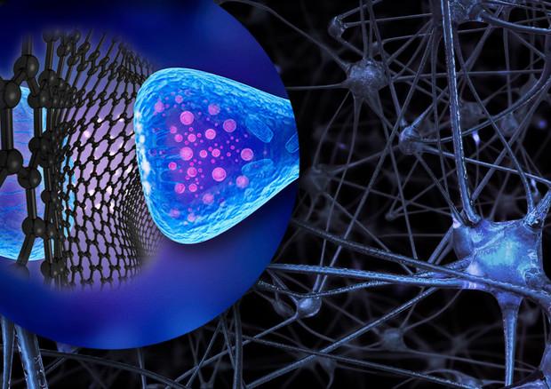 'Fiocchi' di grafene interferiscono con l'attività dei neuroni eccitatori del cervello (fonte: Denis Scaini, SISSA) © Ansa