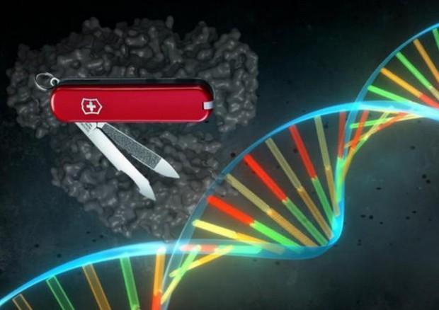 La tecnica del taglia-incolla il Dna, Crispr, consente di riscrivere specifiche sequenze del codice genetico. (fonte: Pablo Alcón / Università di Copenhagen) © Ansa