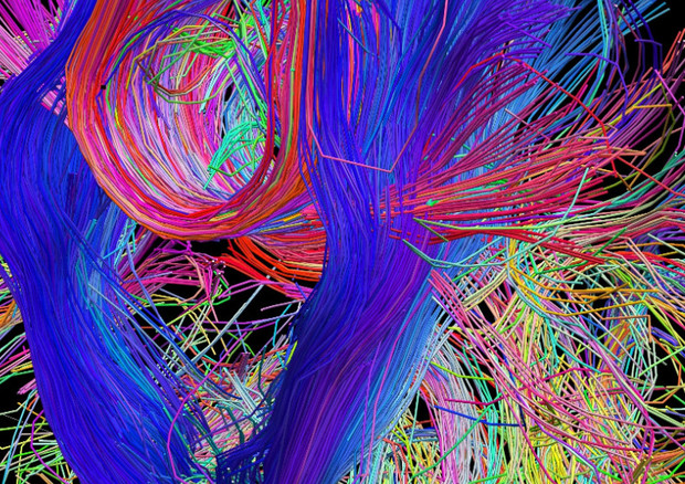 Una mappa delle connessioni tra le fibre nervose (fonte: Human Connectome Project) © Ansa