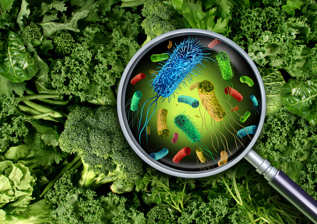Oms, cibo non sicuro causa malattie a 600 milioni di persone nel mondo © Ansa