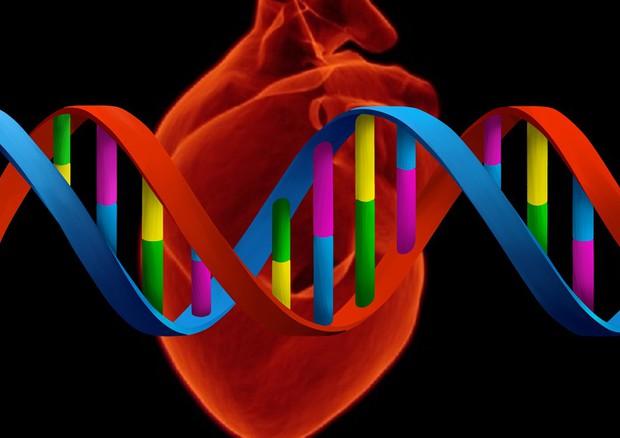All'origine delle malattie cardiovascolari c'è un gene perduto già nei progenitori dell'uomo © Ansa