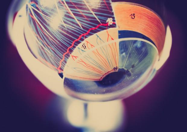 L'immagine in 3D dell'occhio © Ansa