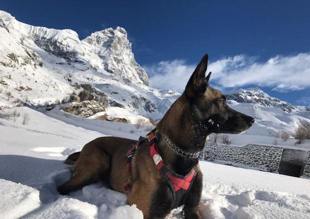Cane soccorritore sopravvive 16 giorni sui ghiacciai del Cervino