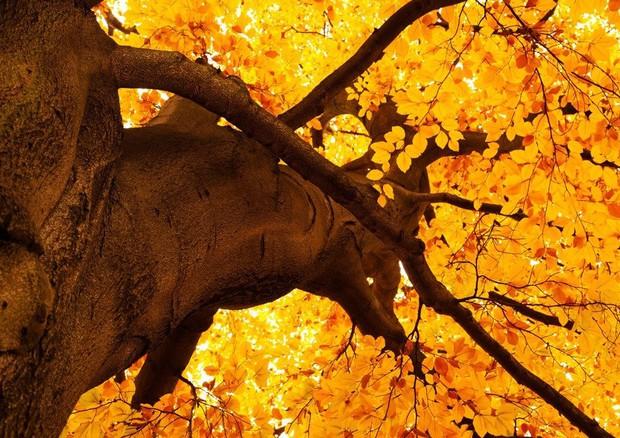 Equinozio d'autunno 2020: quand'è e cos'è