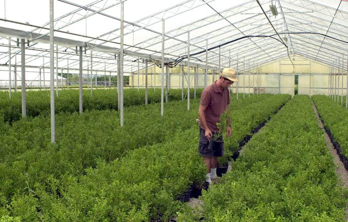 Floricoltura marciano cepi ridisegnare categoria for Libri per fioristi