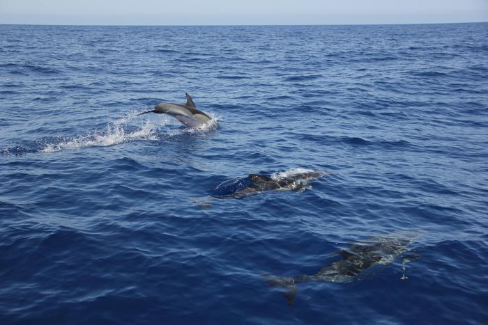 In arrivo regole per nuotare coi delfini alle hawaii animali - Bagno coi delfini roma ...