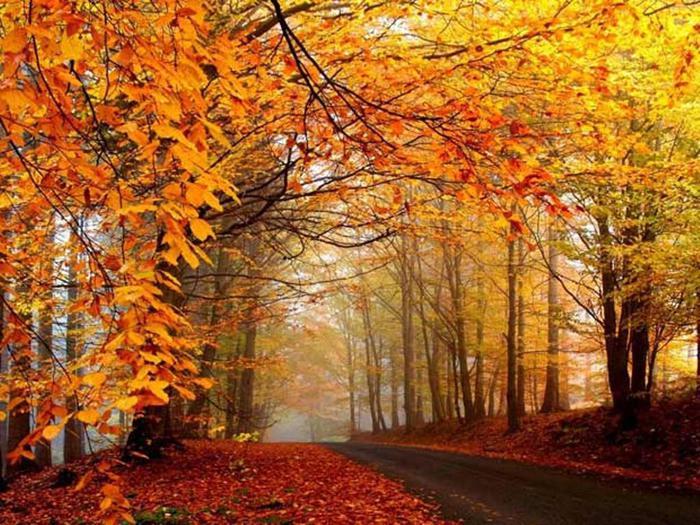 Foliage spettacolo dalla val d 39 aosta alla calabria for Foto per desktop gratis autunno