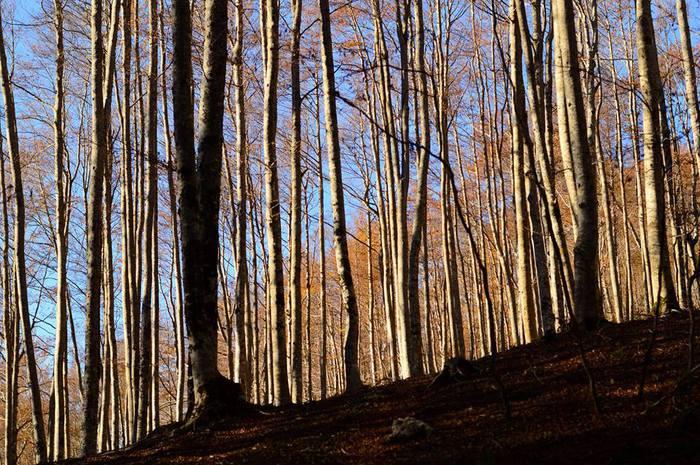 Filiera del legno tra sostenibilit ambientale e lotta for Italia legno energia