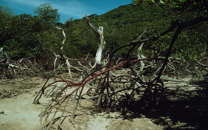 Clima: Cambiamenti Costeranno 69.000 Mld Entro Il 2100