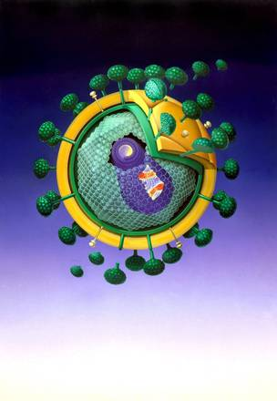 Il virus Hiv