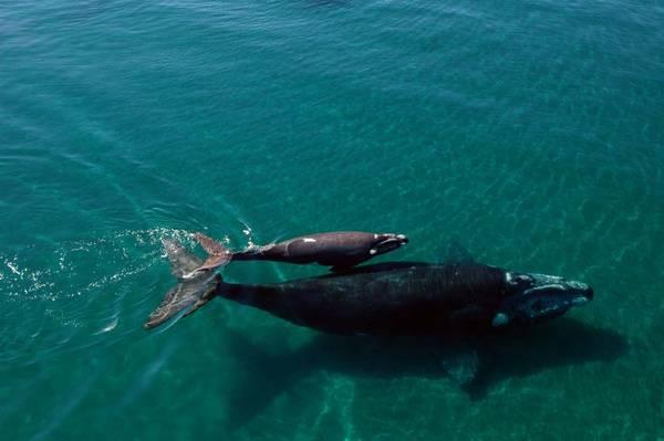 Grandi risultati legge mammiferi marini usa natura for Mammiferi che vivono in acqua
