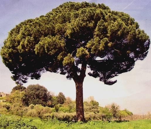 Nel parco del pollino censite 138 specie di alberi for Foto di alberi da colorare