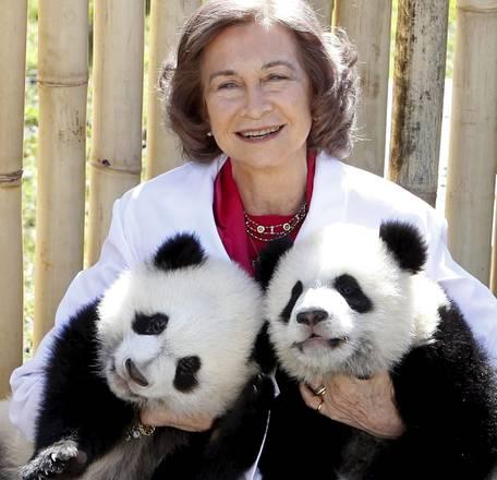 La regina di Spagna con in braccio due panda nati nello zoo di Madrid lo scorso settembre