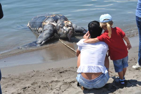 Maltempo mareggiata genova uccide tartaruga gigante ambiente e pesca mare for Prezzo tartarughe
