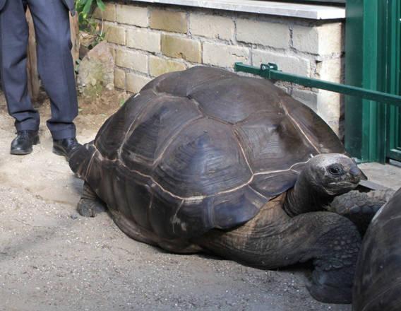 Una nuova casa per le tartarughe delle seychelles for Tutto per le tartarughe