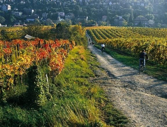 In bici tra le vigne di Vienna (Foto WienTourismus - Popp & Hackner)