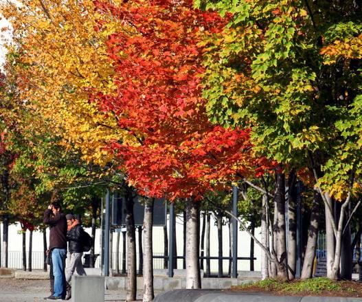 I colori degli alberi d'autunno in un parco di Berlino