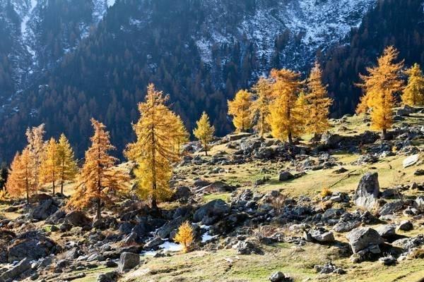 Colori d'autunno in Valle d'Aosta