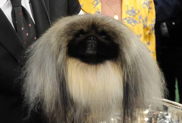 Premiato il cane pi bello del mondo su mon coin de ciel for I mobili piu belli del mondo