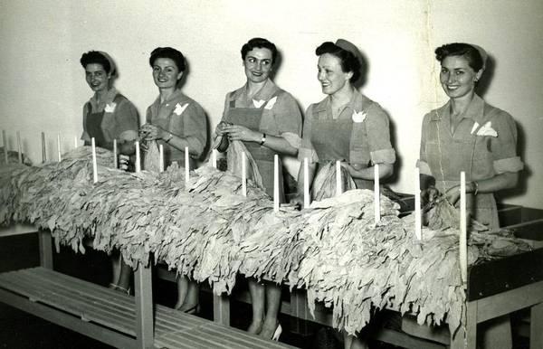 Le tabacchine il lavoro delle donne in bianco e nero for Piani di lavoro della fattoria