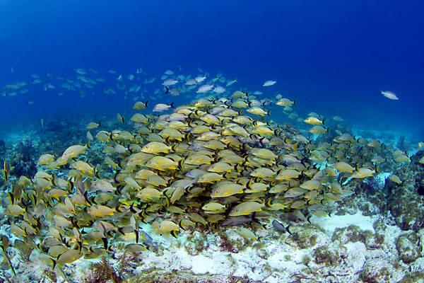 Il clima tropicale destinato a diventare semore più diffuso (fonte: Keoki Stender, Marinelifephotography.com)