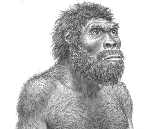 Si riscrive l'evoluzione dell'uomo 1382033814735_skull2