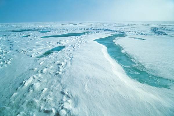 Nell'Artico aumenta il volume dei ghiacci