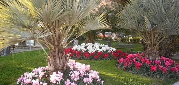 In trentino la 39 difesa verde 39 dei fitofarmaci fiere for Aiuole fiorite immagini