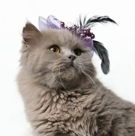 Fiori e perline per l'esposizione felina a Bishkek