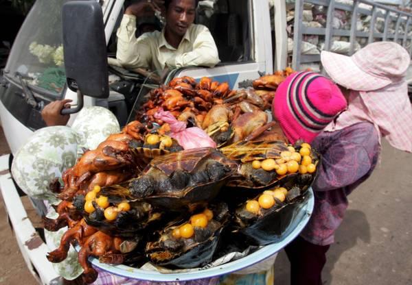 Tartarughe a tavola in cambogia photostory curiosit for Tartarughe acqua dolce prezzo