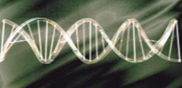 E' nato in Italia il Google della genetica (fonte: A7la3iosh)