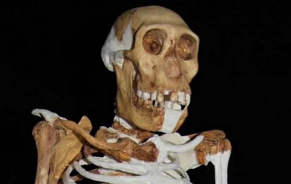 Gli antenati dell'uomo non masticavano cibi duri