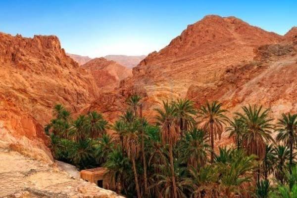 le palme di Douz, citt-oasi chiamata anche la 'porta del Sahara'