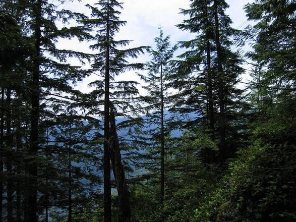 I gas emessi dalle foreste raffreddano il clima (fonte: Chris Stubbs)