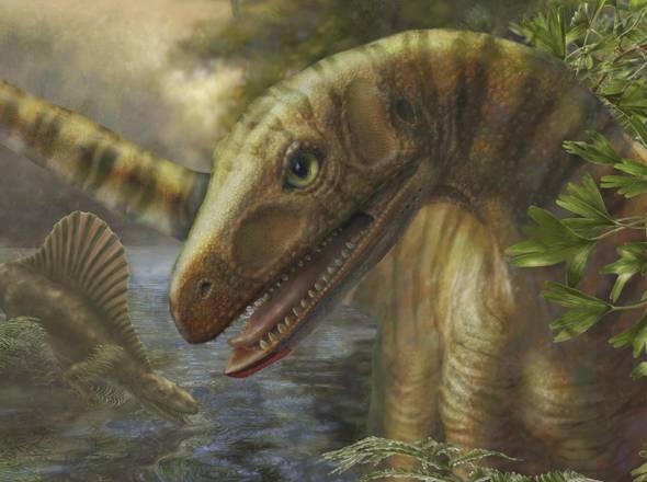 Rappresentazione artistica  di un Asilisauro (fonte: Marlene Donnelly/Field Museum of Natural History)