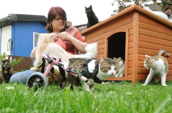Giustamente blog brigitta il gatto sulla sedia a rotelle for Vecchio in sedia a rotelle