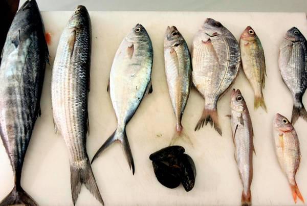 Slow fish porta a genova un mare di pesce da scoprire - Pesci comuni in tavola ...