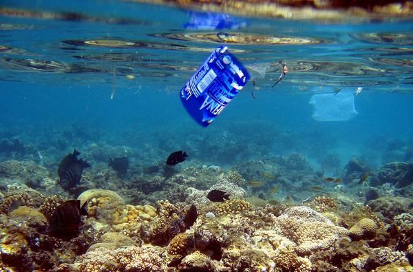 ALLE HAWAII IL 19% DEI PESCI PREDATORI MANGIA PLASTICA