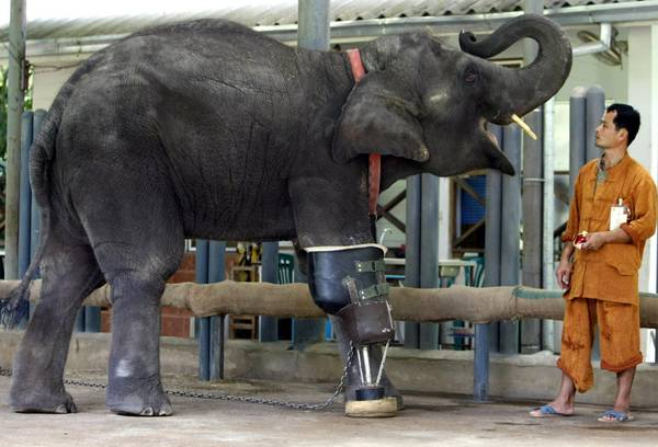 L'elefante Mocha