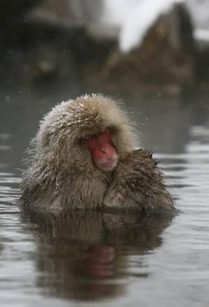 Il bagno caldo dei macachi giapponesi photostory for Bagno caldo durante il ciclo