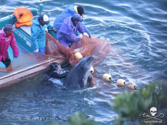 Enpa scrive a premier Giappone, stop a mattanza delfini